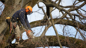 Wiltshire Tree Surgery